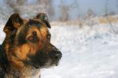 Śnieżny portret psa