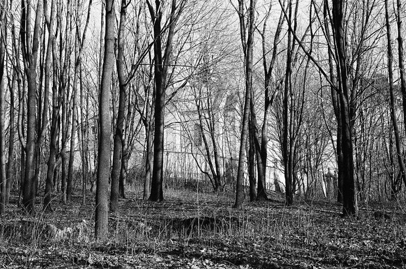 Rezerwat Karczówka, las.