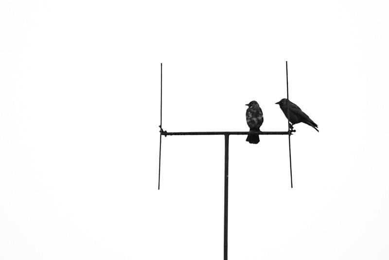Dwa ptaki na antenie.