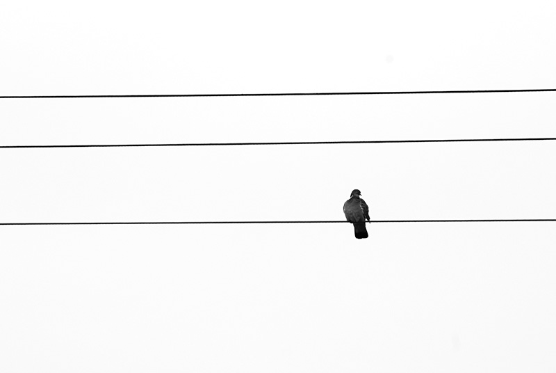 Ptak siedzący na linii wysokiego napięcia.
