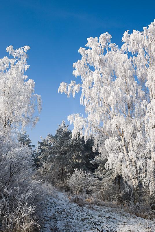 Zima w Kielcach, góra Dalnia.