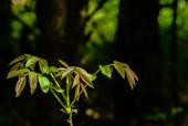 Młode drzewo w lesie