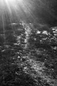 Świetlista ścieżka
