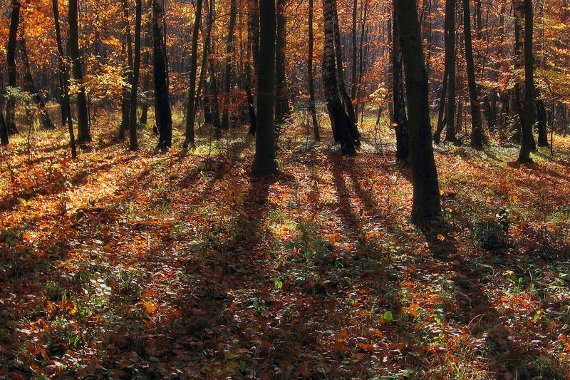 Kolorowy, jesienny las.