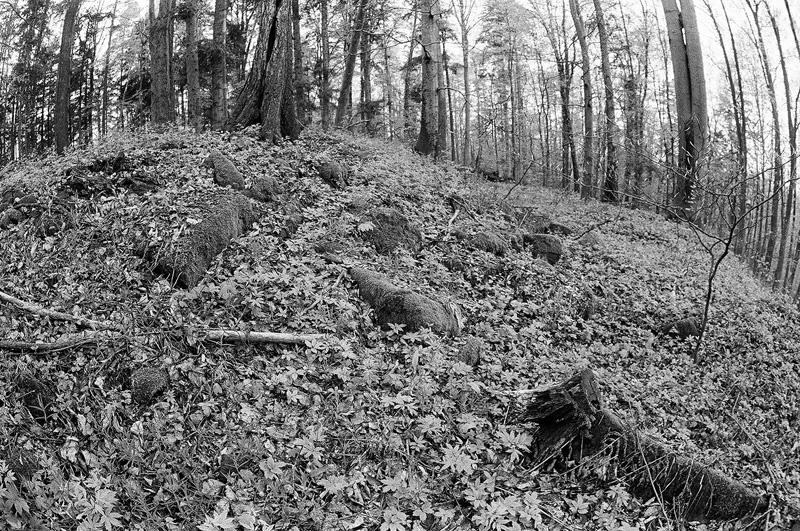 Widoczna część kamiennego wału - Rezerwat Góra Dobrzeszowska.
