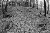 Ruiny pogańskiego sanktuarium