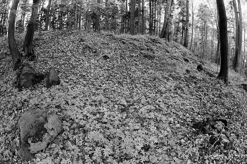 Widoczny element kamiennego wału - Rezerwat Góra Dobrzeszowska.