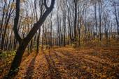 Rezerwat Karczówka jesienią