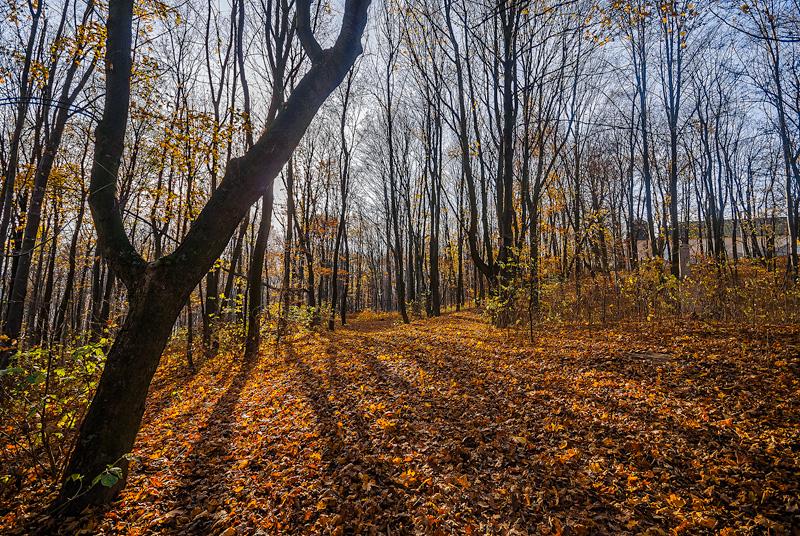 Jesienny las w słoneczny dzień.