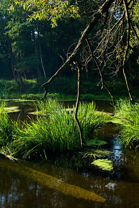 Rzeka Czarna Nida w okolicy Tokarni, lato.