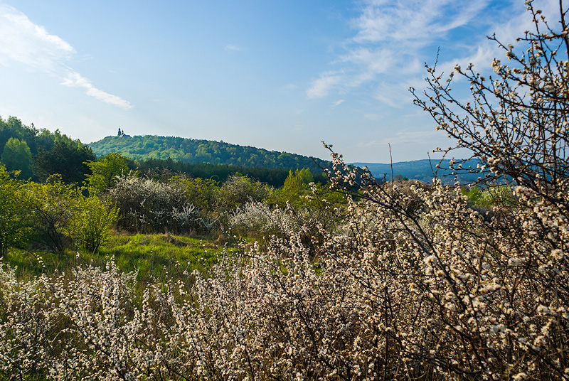 Wiosenny krajobraz.
