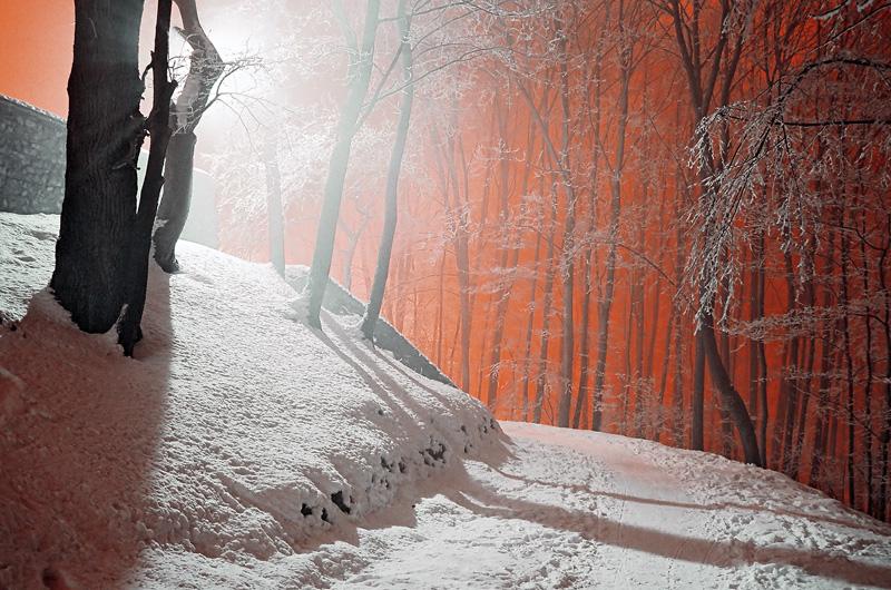 Rezerwat Karczówka w zimową noc, -34°C, Kielce.