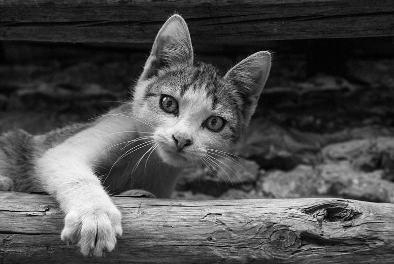 Młody kot z łapą.