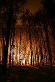 Nocny podgląd Karczówki