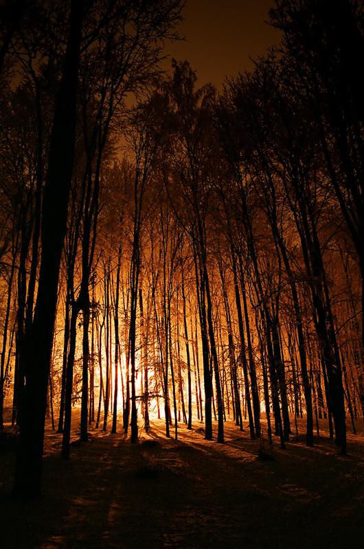 Rezerwat Karczówka w zimową noc, Kielce.