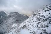 Zimowy widok z Sarniej Skały