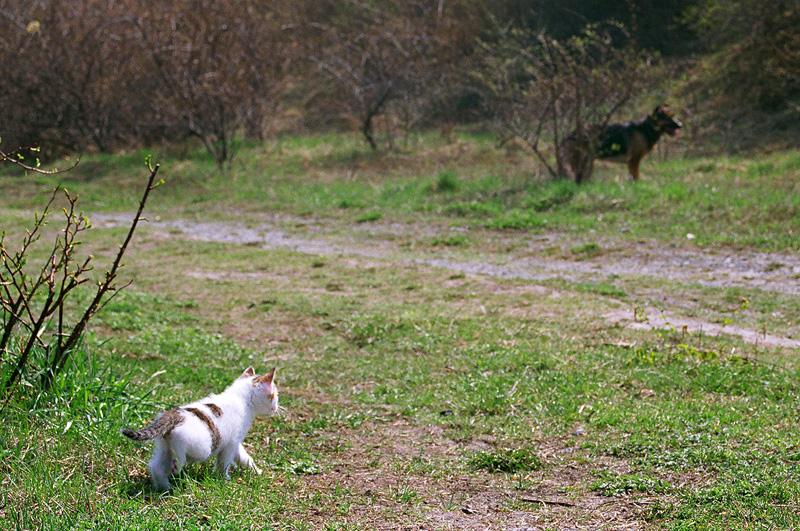 Rozglądający się kot.