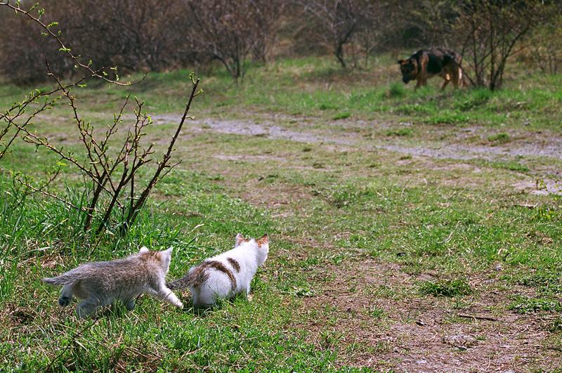 Koty obserwujące psa.