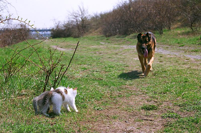 Nastroszone koty oczekujące psa.