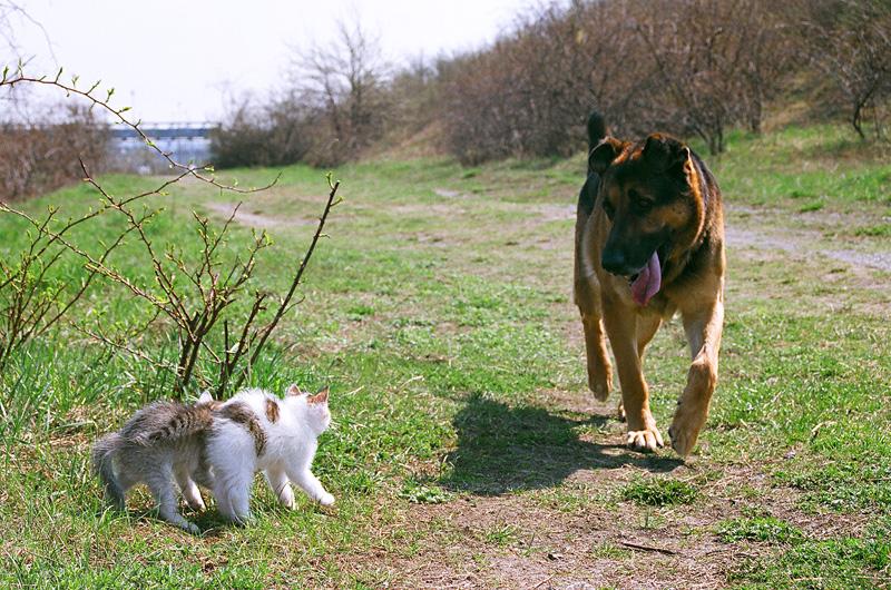 Koty i pies tuż przed spotkaniem.