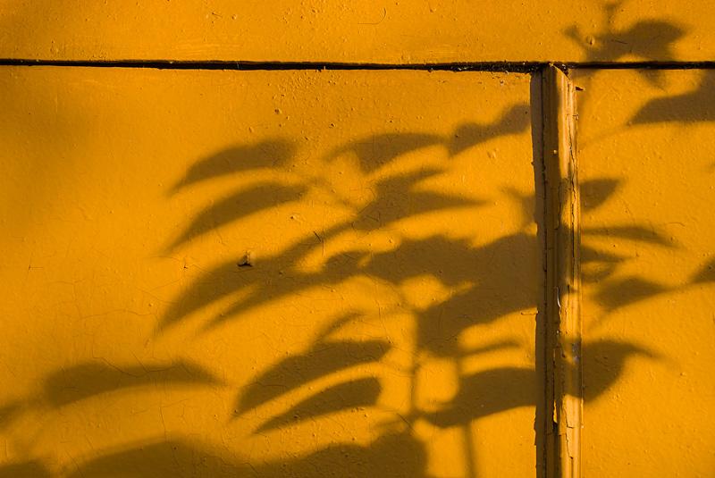 Cień krzewu na pomarańczowej ścianie.