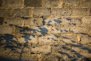 Cieniodrzew mur