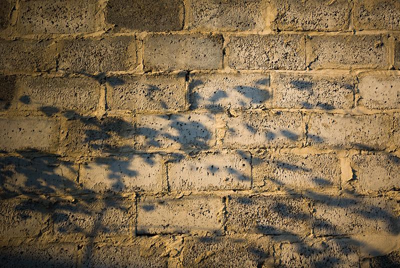 Cień drzewa na murze.