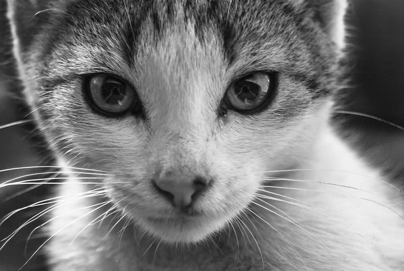 Portret kota z odbiciem w oczach.