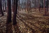 Rezerwat Karczówka nocą