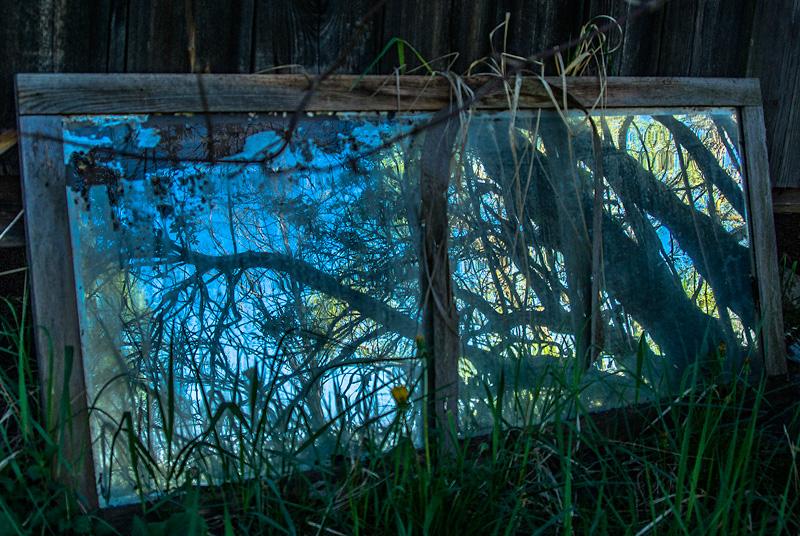 Zniszczone, porzucone lustro z odbiciem drzewa.