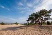 Słoneczne wydmy w Soest, Holandia