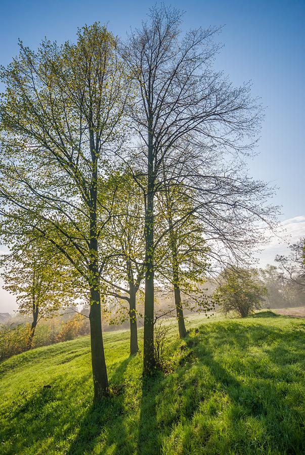 Wiosenne drzewa - Podczas wschodu słońca na Karczówce w Kielcach.