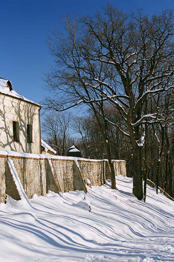 Cienie drzew na klasztornym murze.