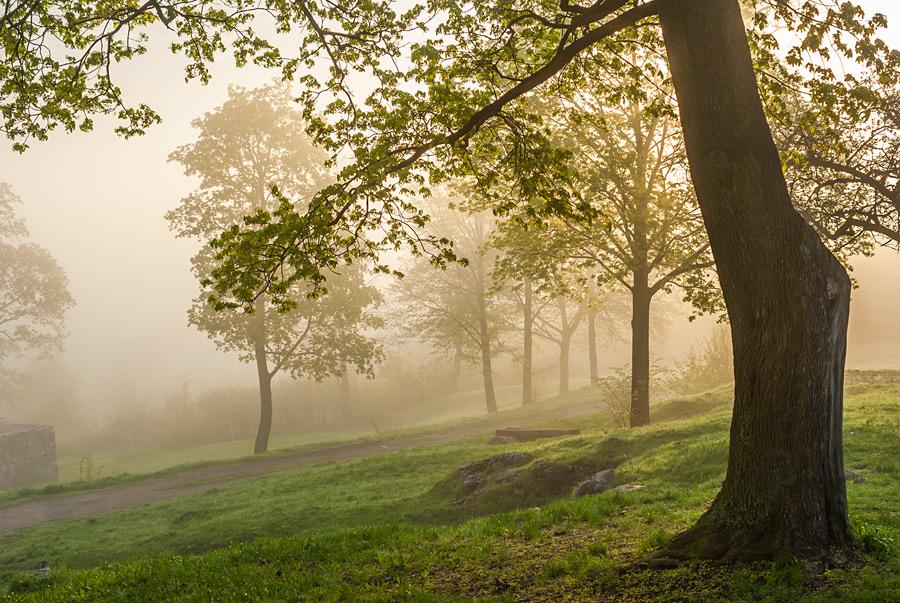 Rezerwat Karczówka w Kielcach podczas wiosennego wschodu słońca.