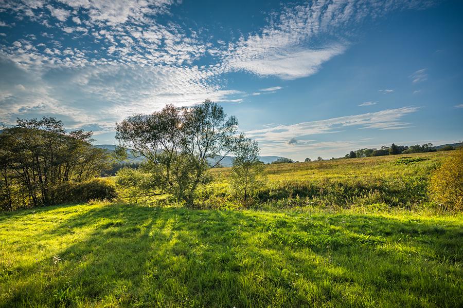 Łąka w Bieszczadach przy Wołosatem w letnie popołudnie.